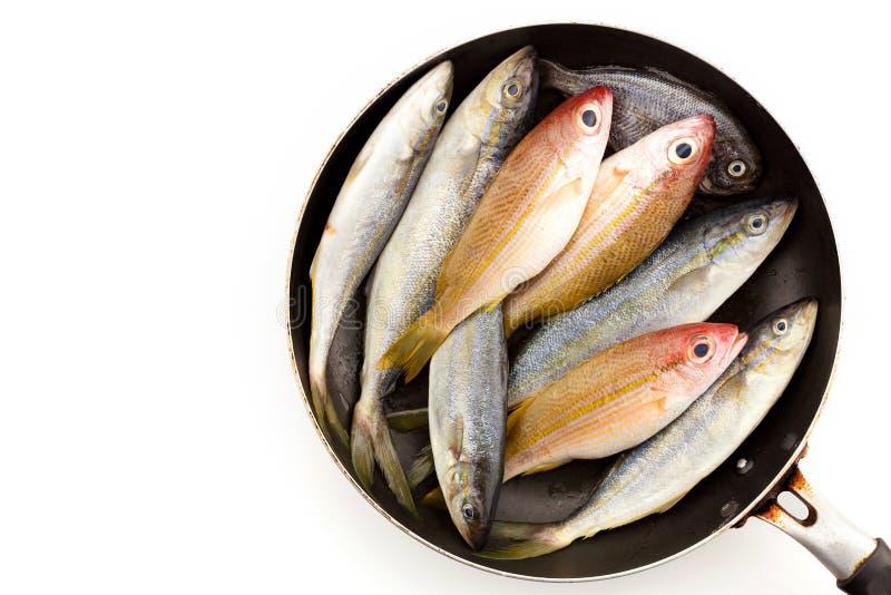 Peixes frescos em uma bandeja isolada no fundo branco foto de stock