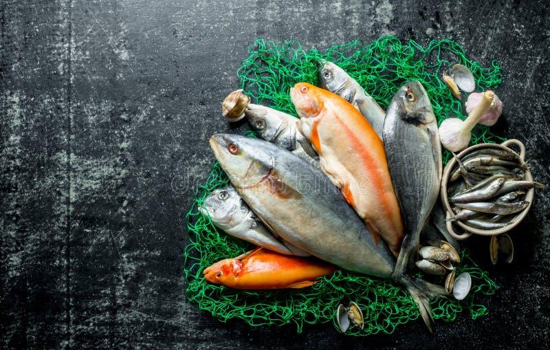 Peixes frescos em uma rede de pesca com ostras foto de stock royalty free