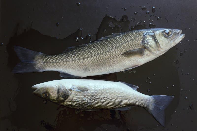 Peixes frescos em uma tabela de pedra preta Alimento saud?vel do conceito, marisco fresco imagem de stock