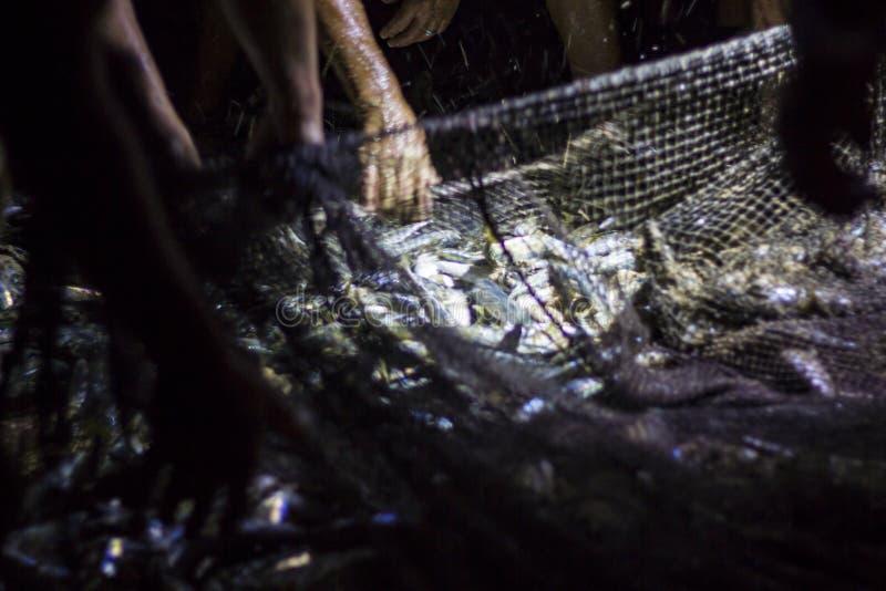 Peixes frescos na rede de pesca imagem de stock