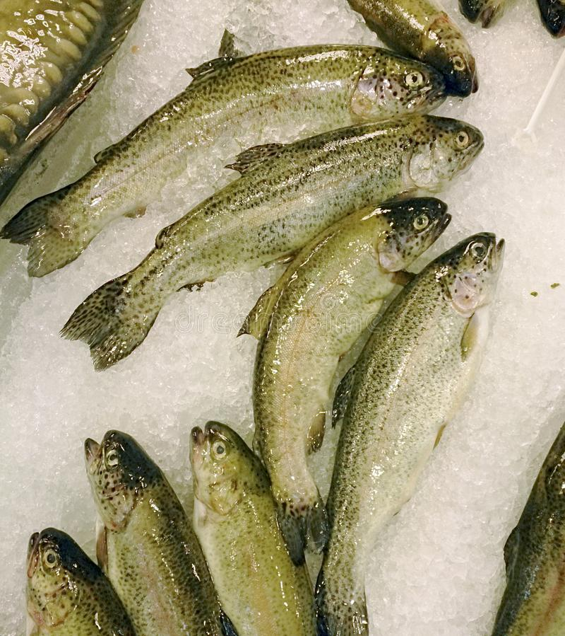 Peixes frescos no gelo no mercado fotos de stock royalty free