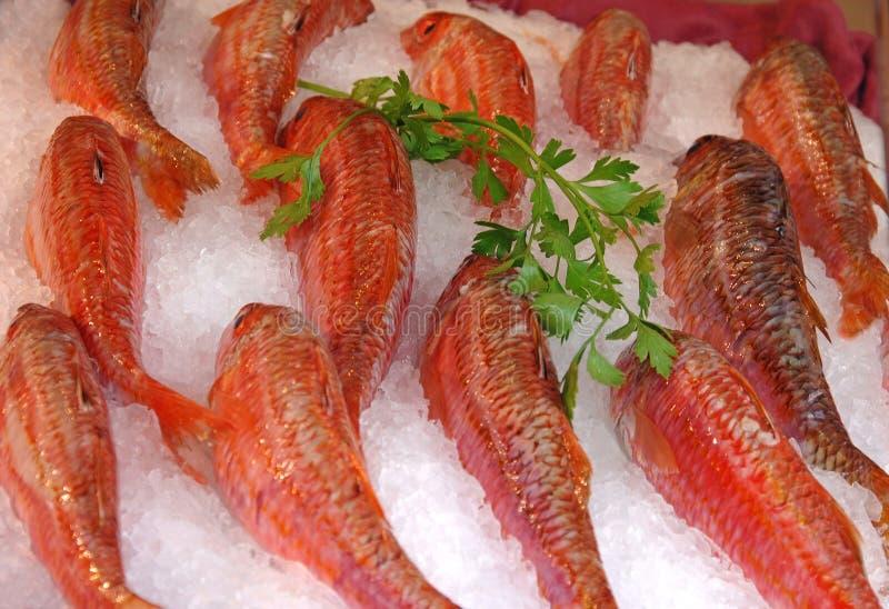 Peixes frescos no gelo para a venda imagens de stock