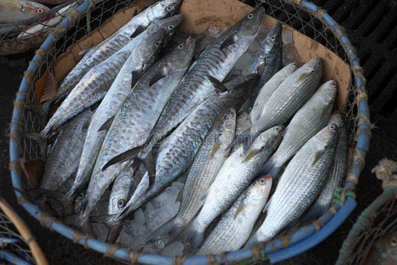 Peixes frescos no mercado de peixes de Dubai imagens de stock