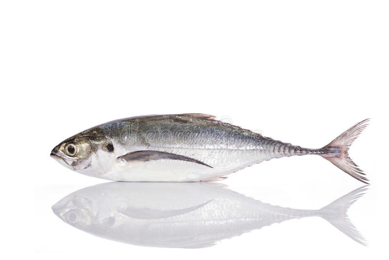Peixes frescos (scad do torpedo) Tiro do estúdio isolado no branco fotos de stock