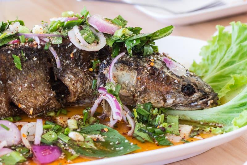 Peixes friáveis picantes do snakehead imagens de stock