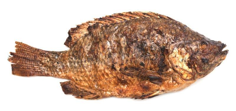 Peixes grelhados fotografia de stock royalty free