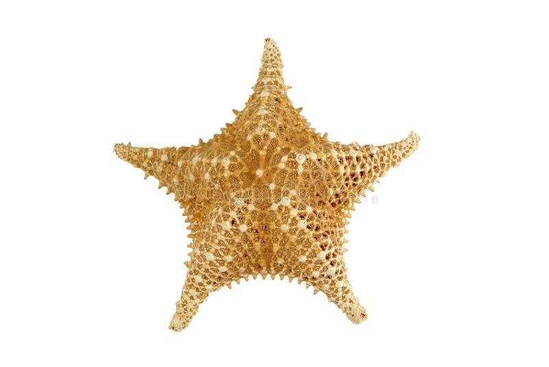 Peixes isolados da estrela no branco fotografia de stock royalty free