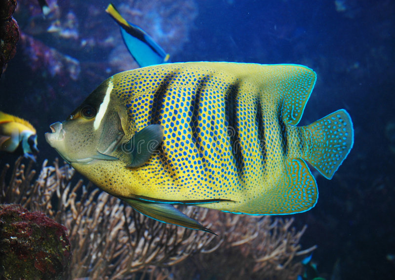 Peixes marinhos fotografia de stock