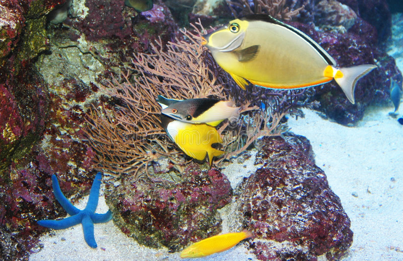 Peixes marinhos imagem de stock