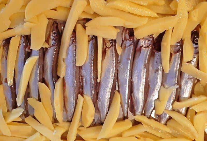 Peixes minúsculos com grande alimento cortado das batatas foto de stock