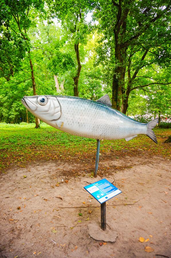 Peixes modelo com sinal fotografia de stock royalty free