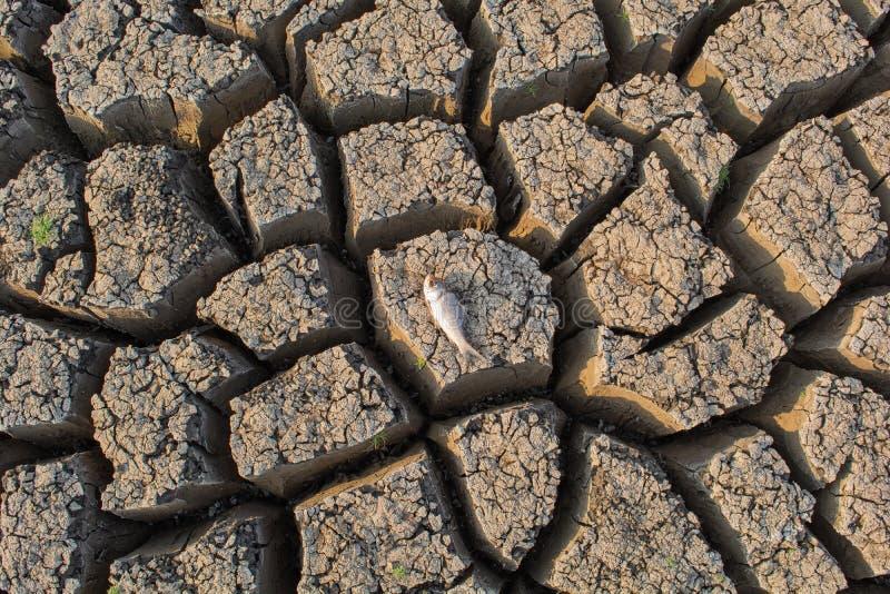 Peixes morridos em um reservatório ou em uma represa vazia ascendente secada devido a uma vaga de calor do verão, a uma baixa pre imagem de stock royalty free