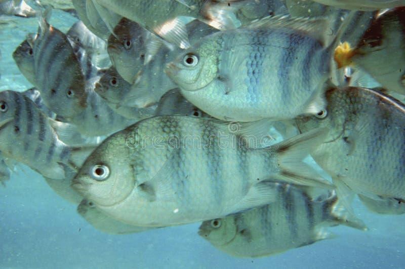 Peixes na lagoa de Aitutaki imagens de stock