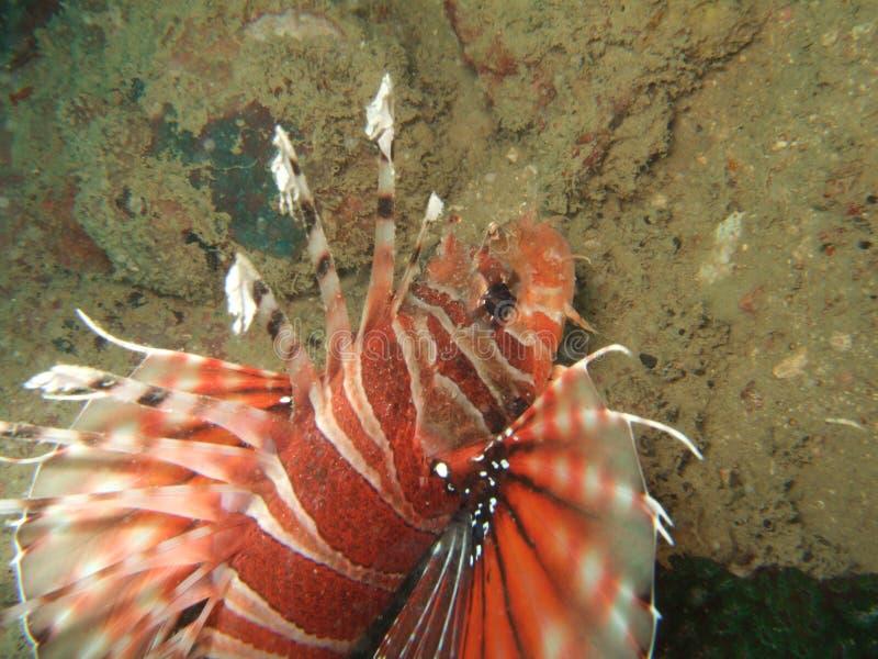 Peixes na parte inferior de mar fotos de stock royalty free