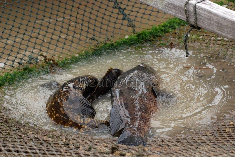 Peixes na piscicultura imagem de stock royalty free
