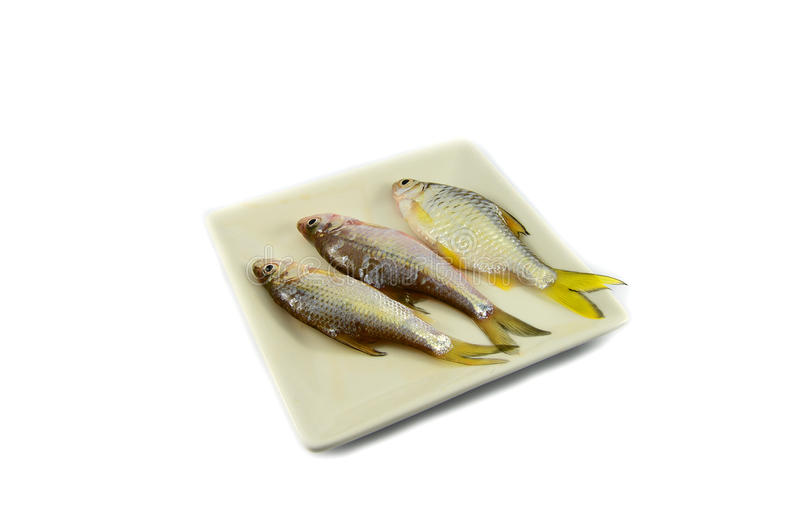 Peixes na placa fotos de stock