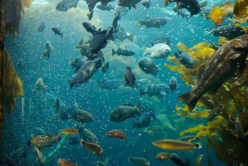 Peixes no aquário imagens de stock royalty free