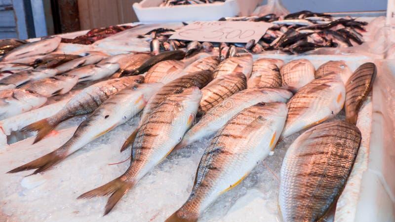 Peixes no banco do fishpond foto de stock royalty free