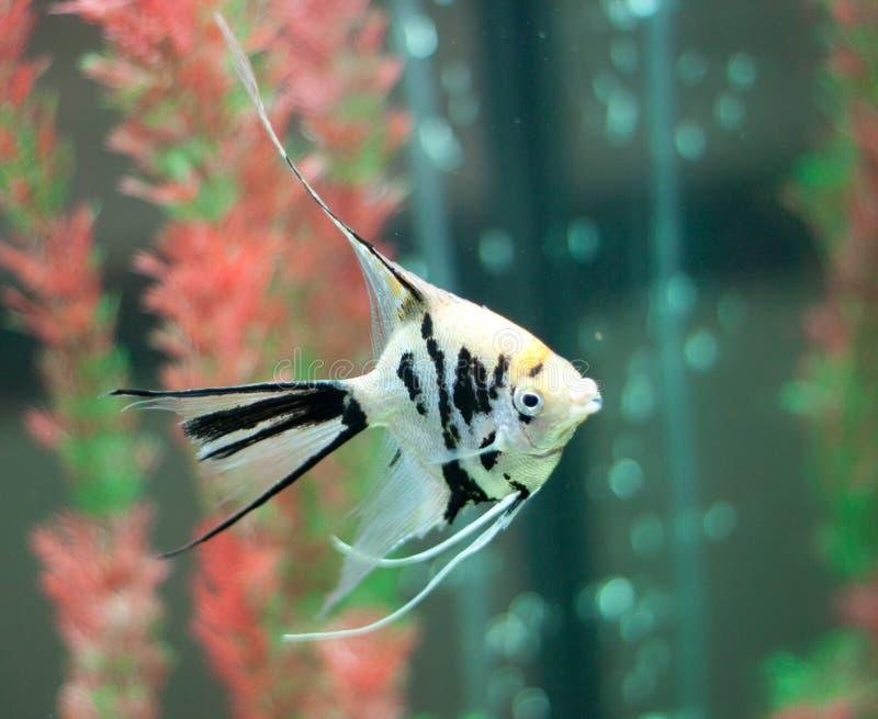 Peixes no fishtank imagens de stock royalty free