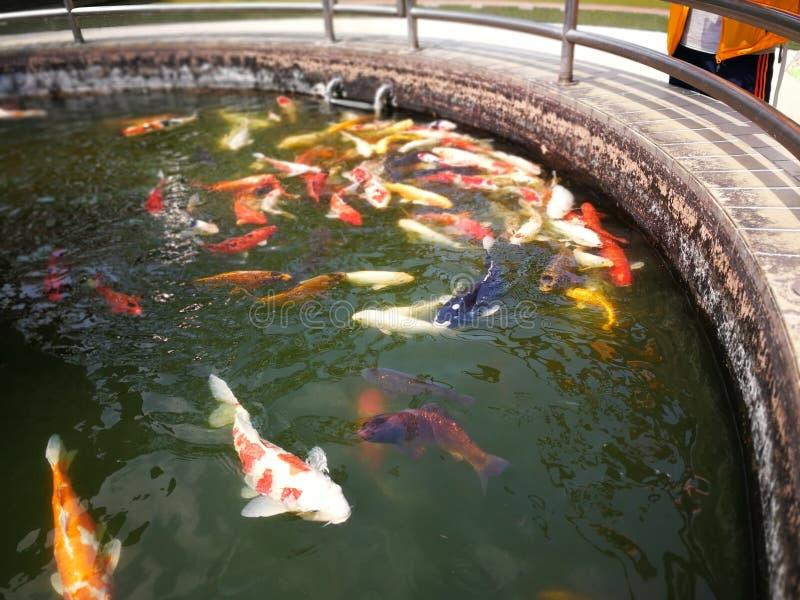 Peixes no fontain perto do templo em Hong Kong foto de stock