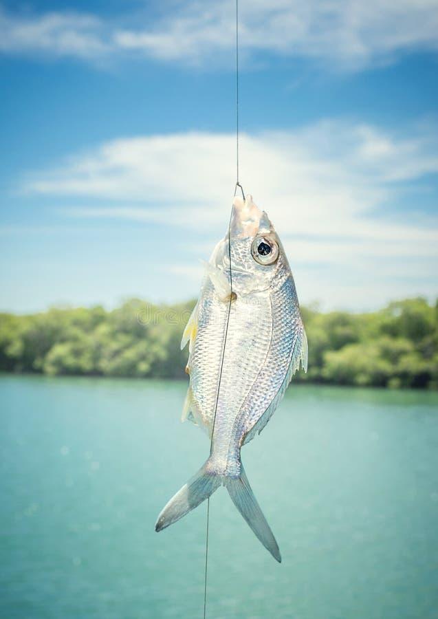 peixes no gancho imagens de stock royalty free