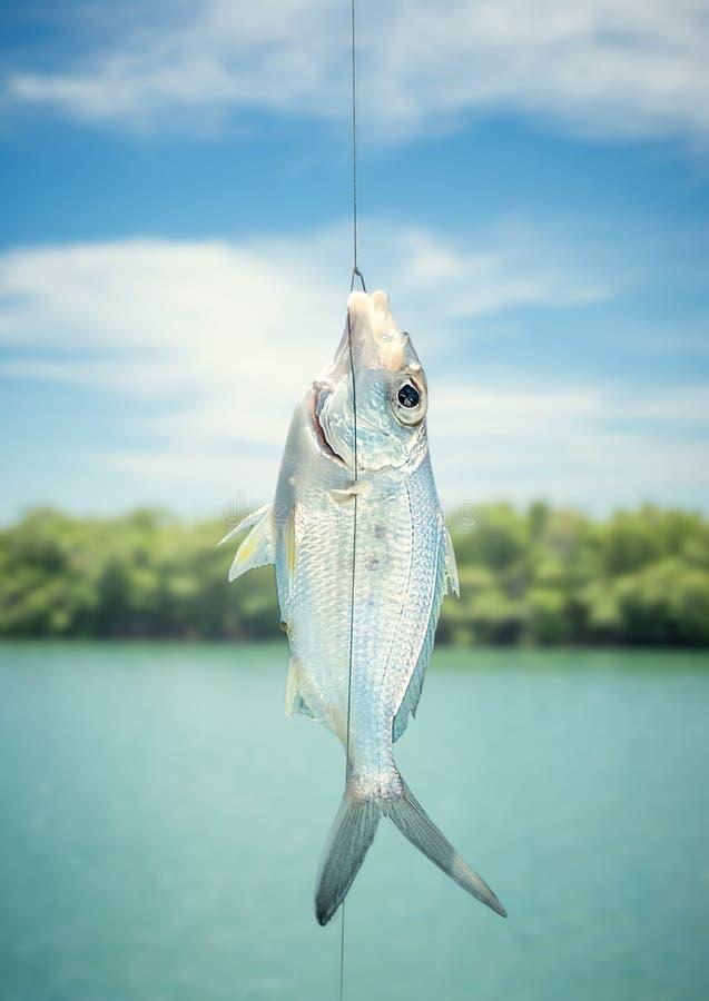 peixes no gancho imagem de stock