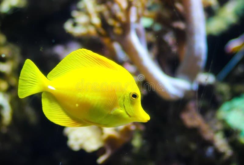 Peixes no oceano foto de stock royalty free