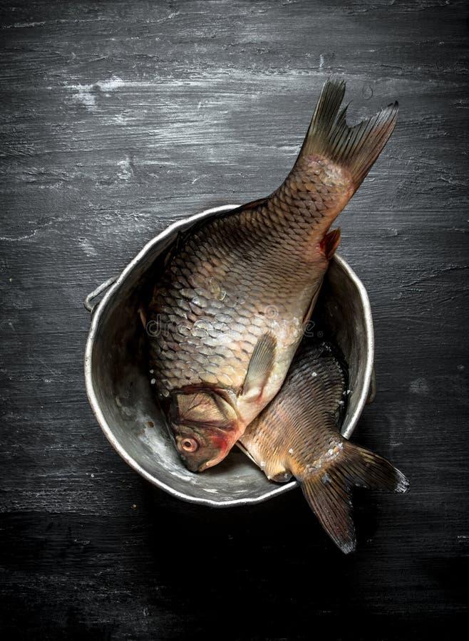 Peixes no potenciômetro velho foto de stock