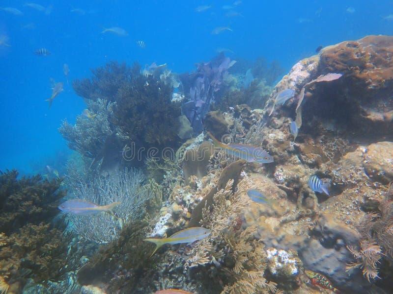 Peixes no recife de corais grande, debaixo d'água imagens de stock royalty free