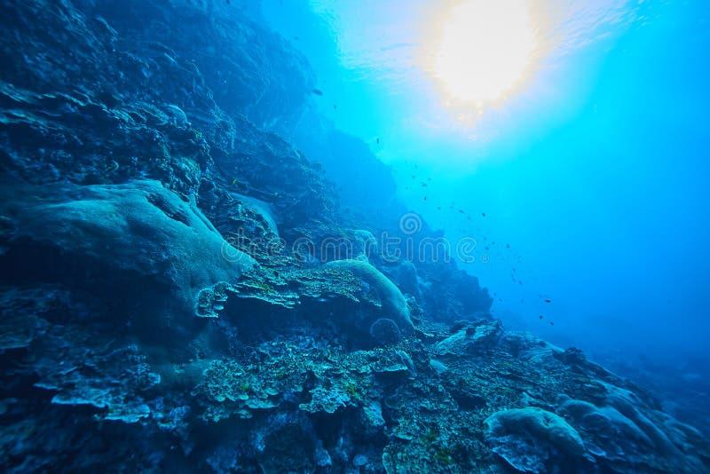 Peixes no recife de corais subaquático imagens de stock
