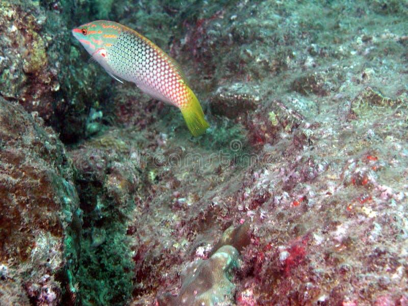 Peixes no seascape fotos de stock royalty free