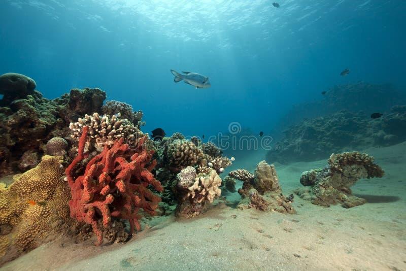 Peixes, oceano e sol fotos de stock royalty free