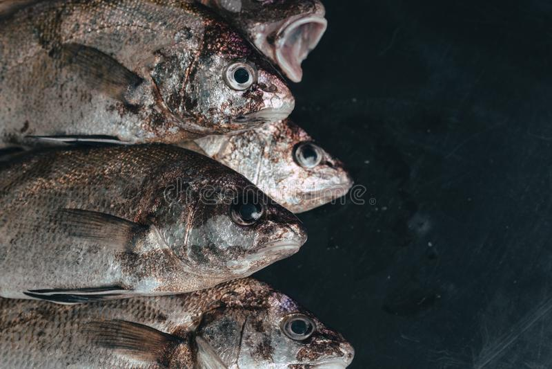Peixes orgânicos frescos no gelo no mercado no close-up escuro do fundo do vintage imagens de stock royalty free