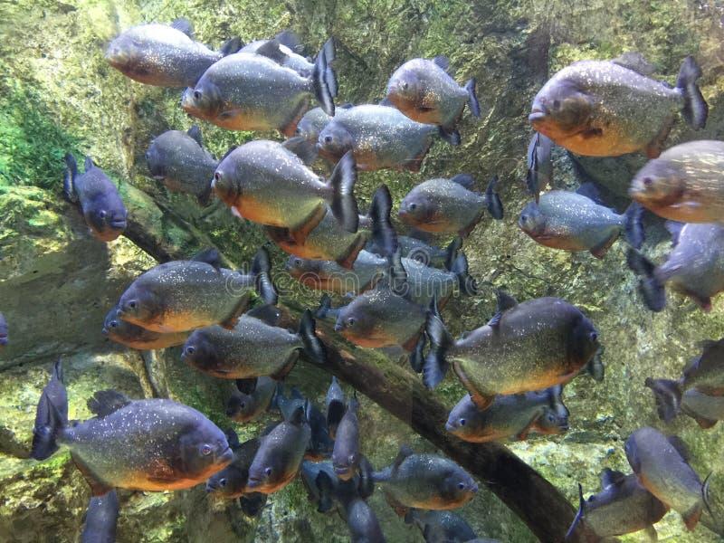 Peixes para a mostra imagem de stock