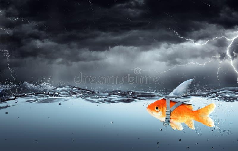 Peixes pequenos com ambições de uma natação grande do tubarão na tempestade foto de stock
