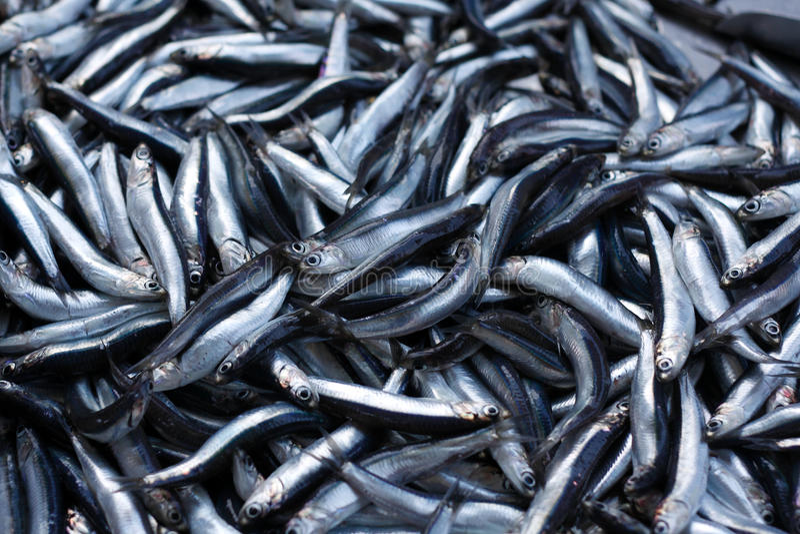 Peixes pequenos frescos fotografia de stock