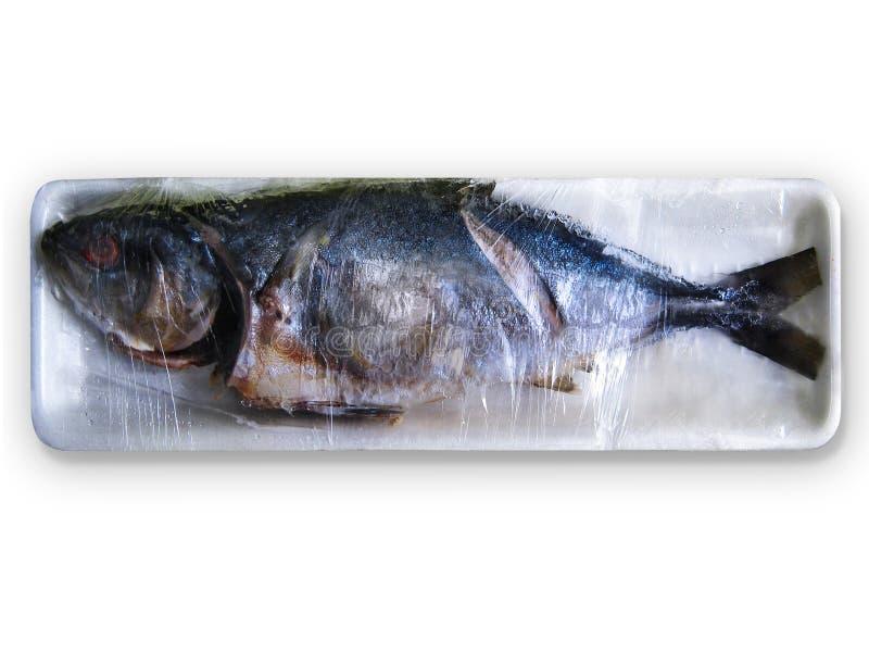 Peixes podres imagem de stock royalty free