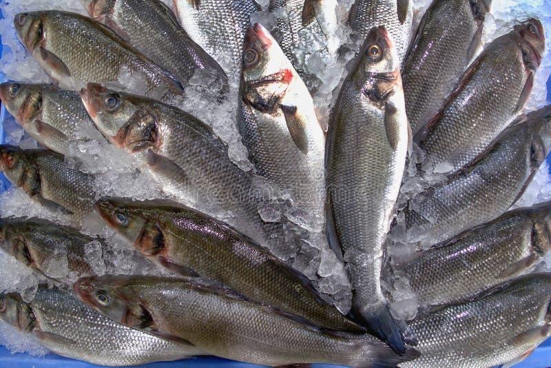 Peixes prateados no gelo a um fã colocado no mercado de peixes foto de stock