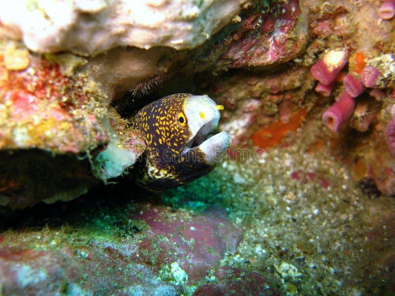Peixes que escondem no recife coral imagens de stock royalty free