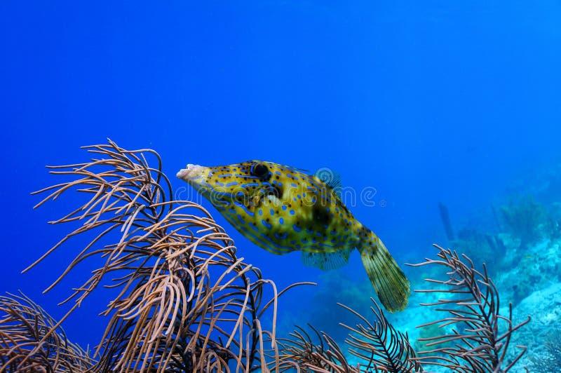 Peixes rabiscados do arquivo fotos de stock