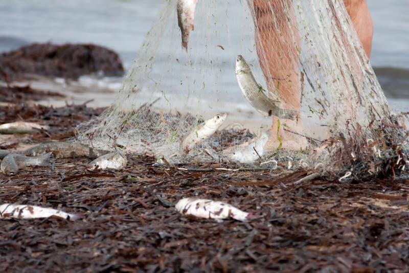 Download Peixes Recentemente Travados Foto de Stock - Imagem de pés, seafood: 12805370