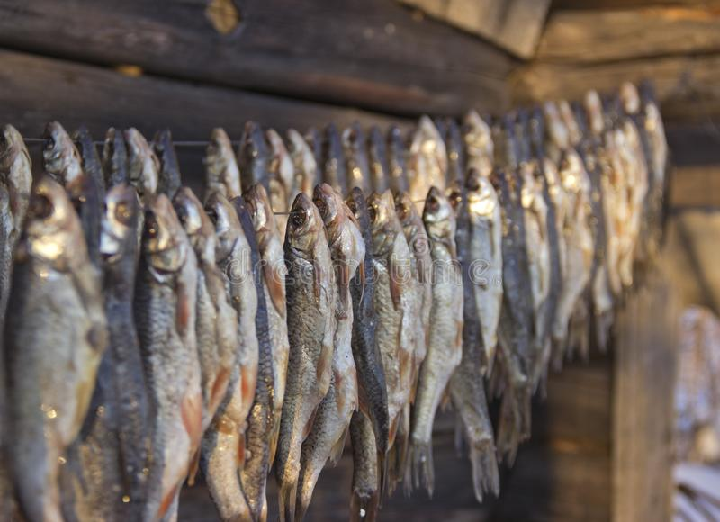 Peixes salgados secos i imagem de stock royalty free