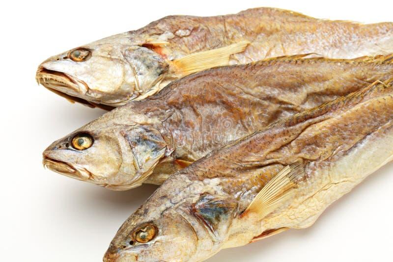 Peixes secados de sal imagem de stock