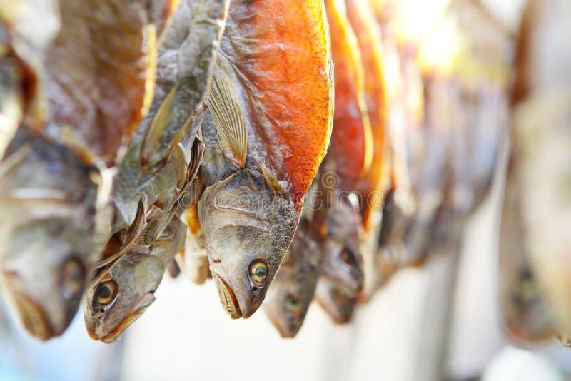 Peixes secados de sal fotografia de stock royalty free