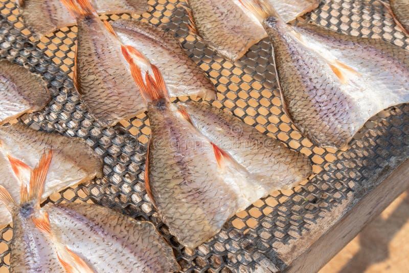 Peixes secados de sal no dia ensolarado em Tailândia fotografia de stock