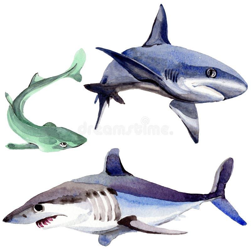 Peixes selvagens do tubarão em um estilo da aquarela isolados ilustração stock