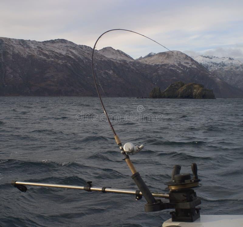 Peixes sobre imagem de stock