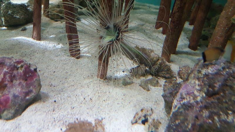 Peixes Spiky foto de stock royalty free