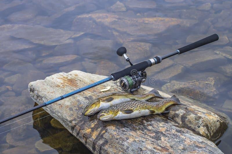 Peixes travados e equipamento de pesca da truta marrom na pedra do rio imagem de stock