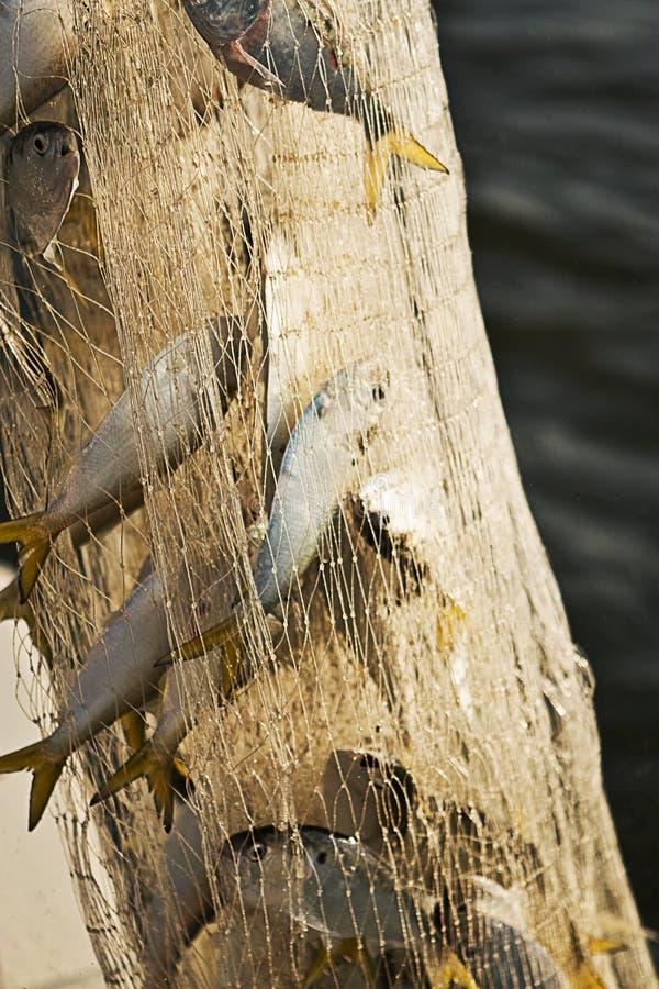Peixes travados em uma rede fotografia de stock
